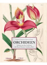Orchideen   Cribb Phillip, ISBN:  9783258081205